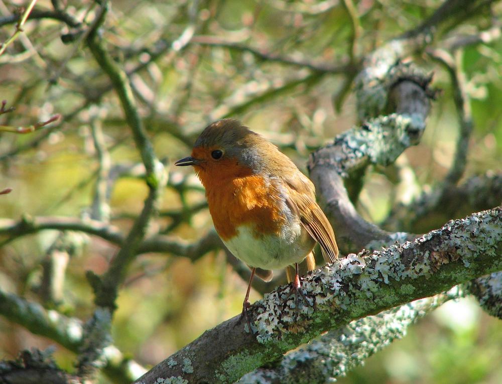 Consider the birds- Matthew 6 (Margaret Stranks) sm
