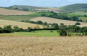 The farm landscape