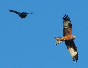consider the birds (Margaret Stranks)