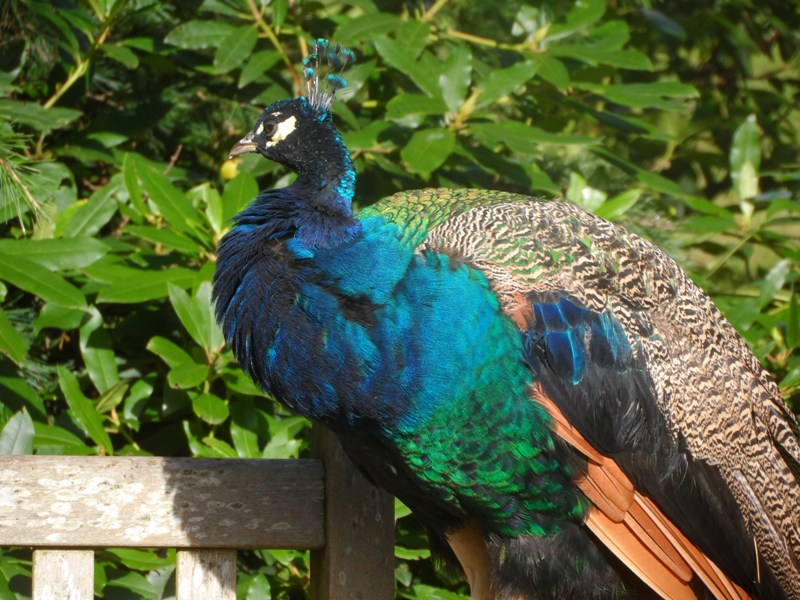 consider the birds-matthew 6