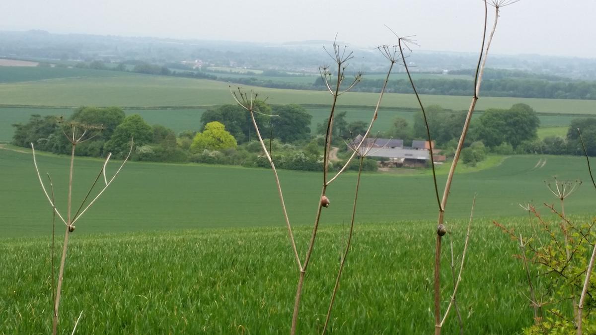 farm landscape sm