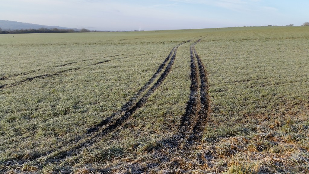 tracks in the frost