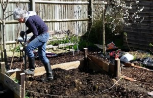 Digging the raised bed