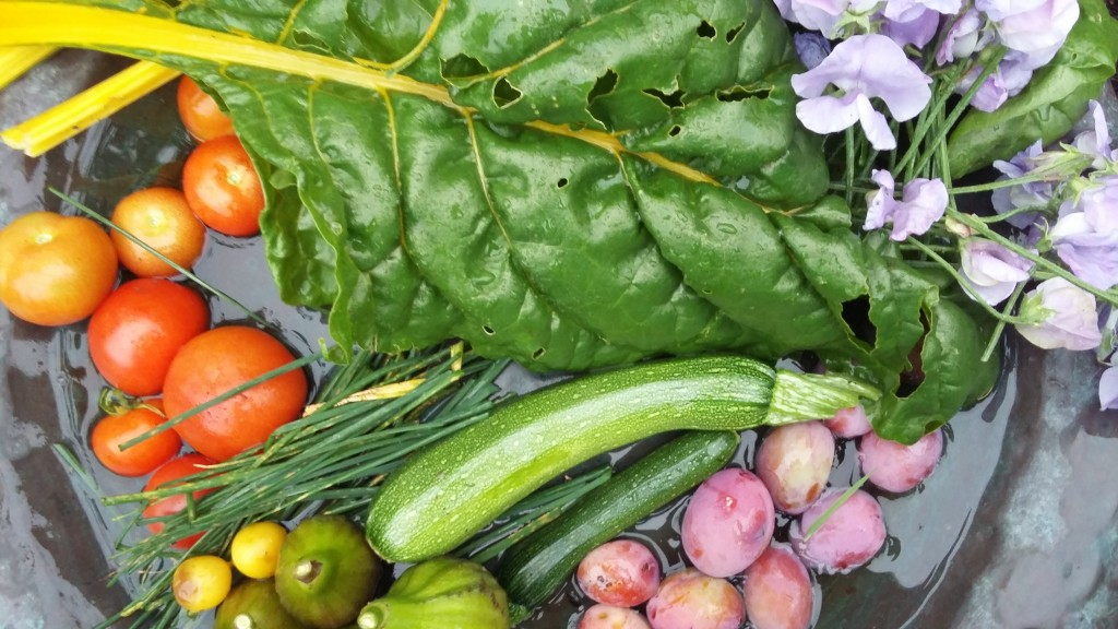 produce-from-the-garden-august